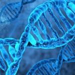 İngiltere İnsan Genetiğini Değiştiriyor