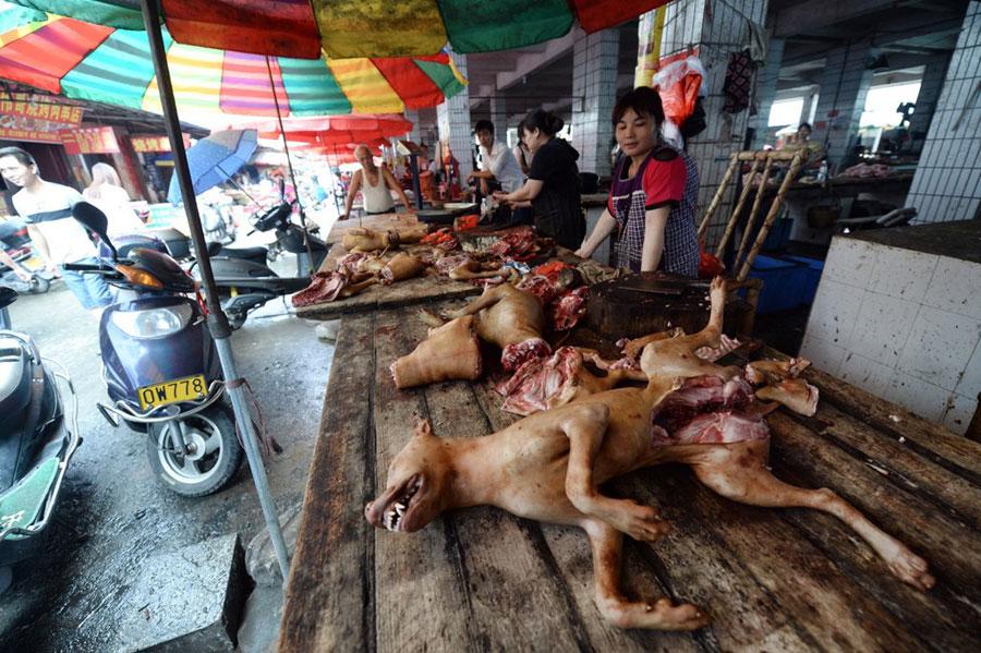 Çin Köpek Yeme Festivali