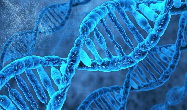 İnsan Genetiği